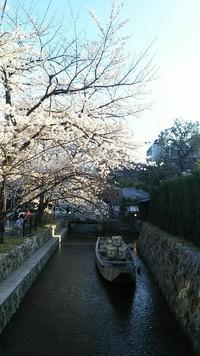 京都の桜 3 高瀬川二条 一之船入