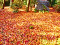 メルマガ416号「京都みちしるべ的、紅葉おすすめスポット」