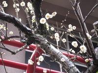 春に向かいます