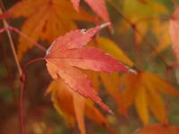 京都御苑 11月27日