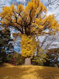 京都御苑 11月28日
