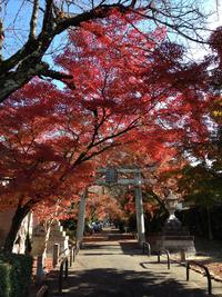 鷺森神社 11月30日