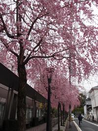 京都地方裁判所 4月6日
