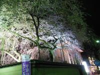 パレスサイドホテルの夜桜