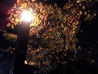 夜の祇園町