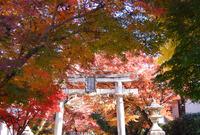 修学院 鷺森神社
