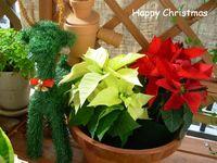 online shop クリスマスセール開催