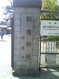 お花見☆新宿御苑