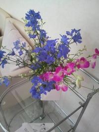 キレイなお花