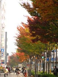 御池通~すたすたお散歩~紅葉見物