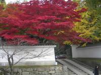 京都東山 知恩院(紅葉)