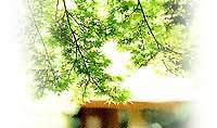 水琴窟と京都の夏