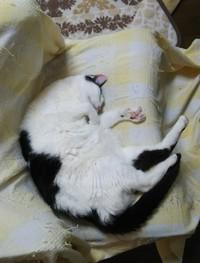 本日の寝相