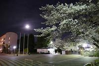 花と月 花のある大学46