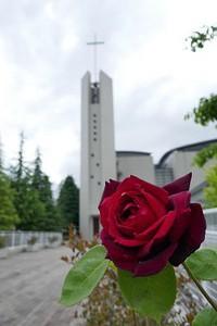 薔薇が咲いています 花のある大学51