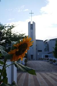 夏の終わりの向日葵(ひまわり) 花のある大学54