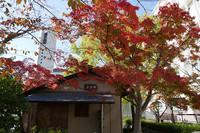 キャンパスの紅葉が見頃となりました