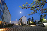 夜桜も楽しめます 花のある大学64