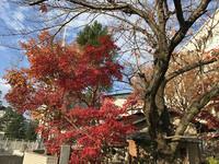 ボヘミアンラプソディ 京都で映画を観る