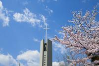 桜の知らせ 続 花のある大学45