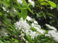 散歩コースの花々。作品