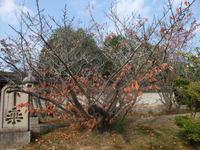 御室仁和寺桜紅葉
