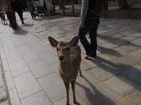 奈良は二月に