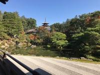 近くて遠い京都観光!!