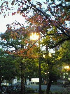 今出川キャンパス、夕方。その2【太田ゼミ】