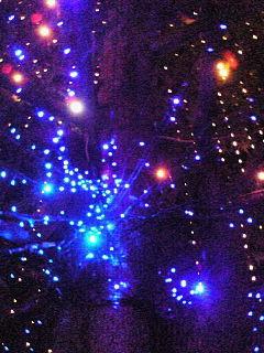 太田ゼミ:同志社大学今出川キャンパスではクリスマスイルミネーションが点灯中です。