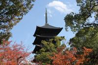 天高くの秋 (東寺)
