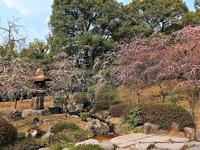 3/19(日) 京都さんぽ ≪ 城南宮 枝垂れ梅 ≫
