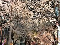 4/6(木) ≪ 今頃、放送中? ≫ 東京・日本橋