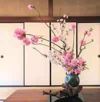 ≪ 春爛漫、桜花が彩るオフィス ≫ in らくたび京町家