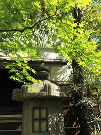 ≪ 新緑、新芽 ≫ in らくたび京町家