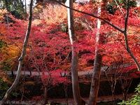 ≪ まだまだ紅葉が見頃です ≫ in 北野天満宮・御土居跡