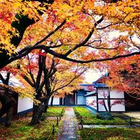 12/4(火) 京の紅葉めぐり ≪ 大徳寺塔頭  黄梅院 ≫