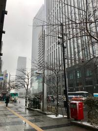2/9(土) 《  雪の東京  》