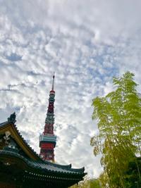 9/14(金) 東京  《  増上寺  》