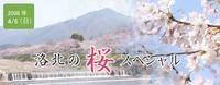 洛北の桜スペシャル