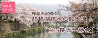 琵琶湖疏水の散歩道と白河院と六勝寺 +祇園の宴