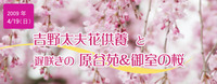 吉野太夫花供養と遅咲きの原谷苑&御室の桜