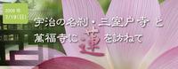宇治の名刹・三室戸寺と萬福寺に蓮を訪ねて