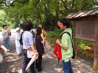 7月28日 下鴨神社・御手洗祭 御苑の百日紅と廬山寺の桔梗