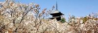らくたび京都講座 ≪ 京都の暦365日 ≫