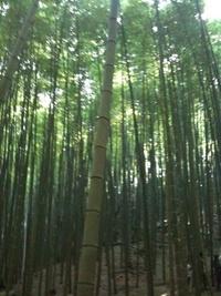 「かぐやの夕べ」のための竹林伐採に参加しました!