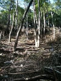 栃の木植栽地の整備に行ってきました!