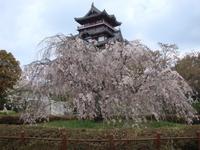 桜に誘われて、メニユーも新しく。