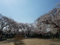 【石田事業所】花は咲く!思ったより全然早く!!