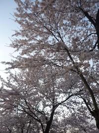 ☆一月遅れの春☆